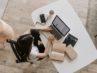 6 Gründe, warum Sie sich einen guten Laptop zulegen sollten